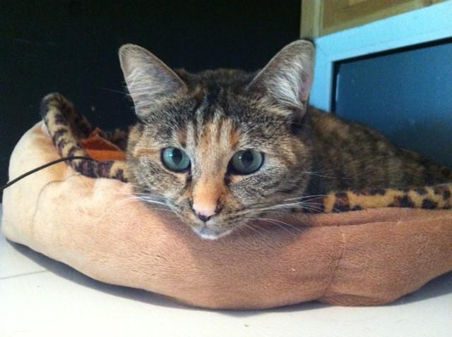 We're Adopting ... Cats! (2/2)