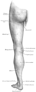 Back of left lower extremity
